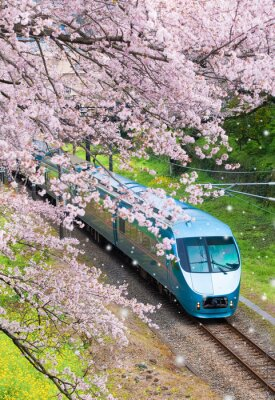 Bild Japan-Zug in Kirschblüte-Kirschblüte Seasom in Yamakita-Stadt, Kanagawa-Präfektur