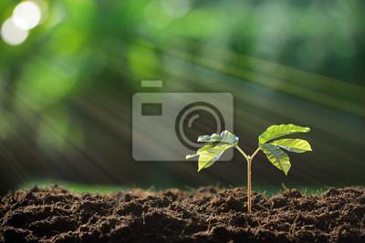 Bild Junge Pflanze im Morgenlicht auf Natur Hintergrund