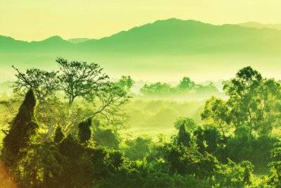 Bild Jungle in Mexiko