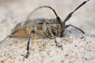 Käfer auf dem Strand