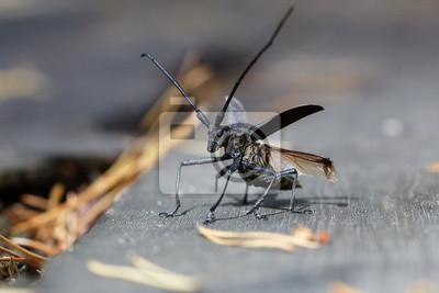 Käfer nimmt ab