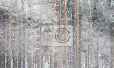 Kalter Winter Wald