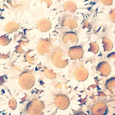 Bild Kamille Blumen - Vintage-Stil