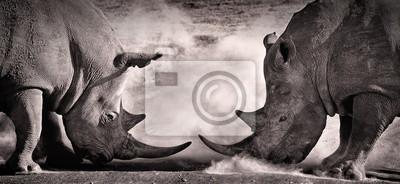 Bild Kampf, eine Konfrontation zwischen zwei weißen Nashörnern in der afrikanischen Savanne auf dem See Nakuru