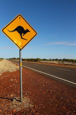 Bild Kangaroo Anmelden Südaustralien
