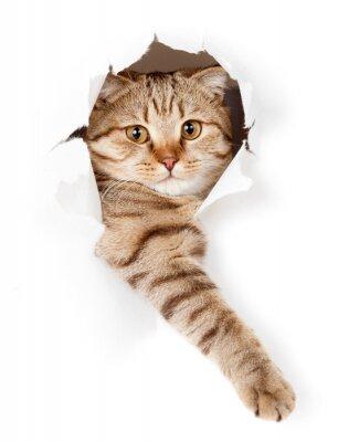 Bild Katze in weiße Tapete Loch