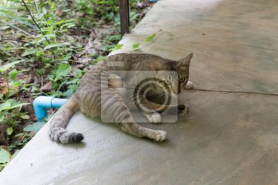 Katzen- und Augenkontakt