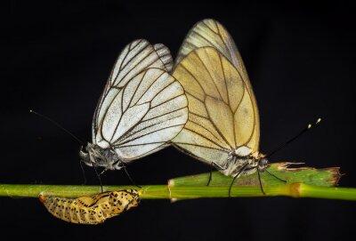 Bild Kelebekler