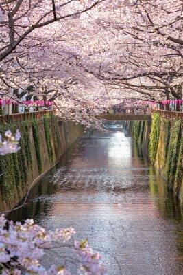 Bild Kirschblüte gezeichneten Meguro Kanal in Tokyo, Japan.