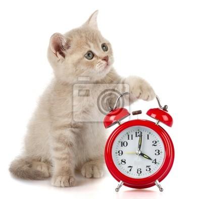 Kitten Zeit