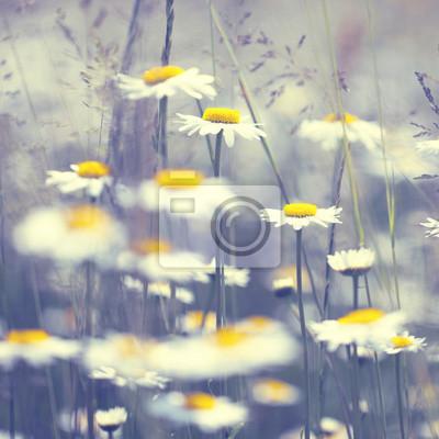 Klassiker sonnigen Gänseblümchen Blumen Hintergrund