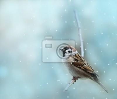Bild kleine Spatz im Winter