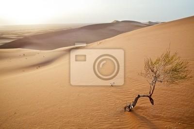 Kleiner Baum in der Sahara-Dünen.