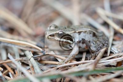 Kleiner Frosch im Wald