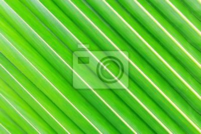 Bild Kokosblattbeschaffenheit