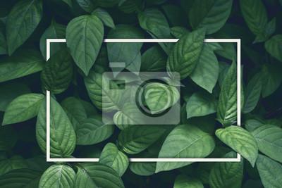 Bild kreativer Plan, grüne Blätter mit Rahmen des weißen Quadrats, flache Lage, für die Werbung der Karte oder der Einladung