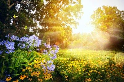 Bild Kunst schöne Landschaft; Sonnenuntergang im Park