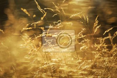Künstlerische verschwommen sonnigen goldfarbenen Landschaft Wiese im Wind. Selektiver Fokus verwendet.