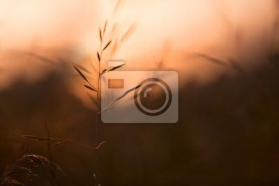 Künstlerischer unscharfer Abendwiesenhintergrund. Selektiver Fokus verwendet.
