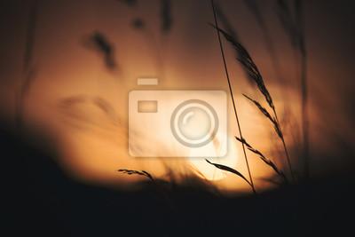 Künstlerischer unscharfer dunkler Abendwiesenhintergrund. Selektiver Fokus verwendet.
