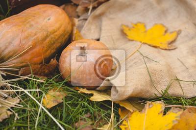 Kürbisse liegen auf dem Gras und Entlassung