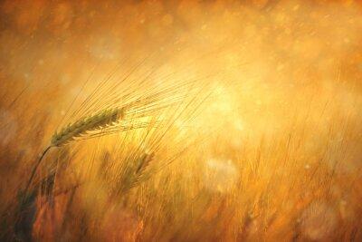 Bild Land sonnigen Weizenfeld Fantasy-Hintergrund