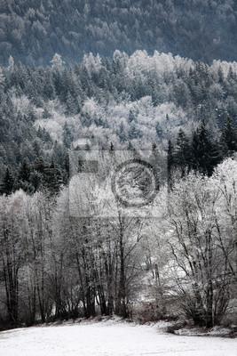 Land Winterwald