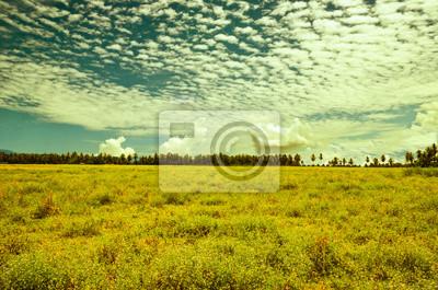 Bild Ländliche Landschaft. Breites Feld mit einer Mischung aus blühenden