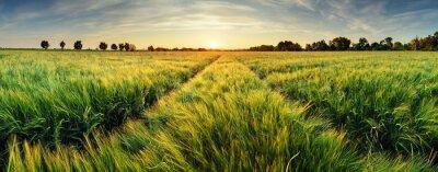 Bild Ländliche Landschaft mit Weizenfeld auf Sonnenuntergang
