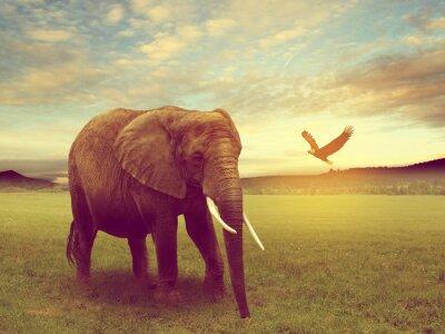 Bild Landschaft mit einem Elefanten Afrika
