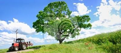 Landwirtschaft Traktor und großen grünen Baum