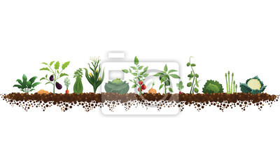 Bild Large Vegetable Garden Illustration