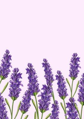Bild Lavendel Zusammensetzung Hintergrund