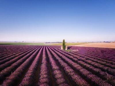 Bild Lavendelfeld mit Kapelle