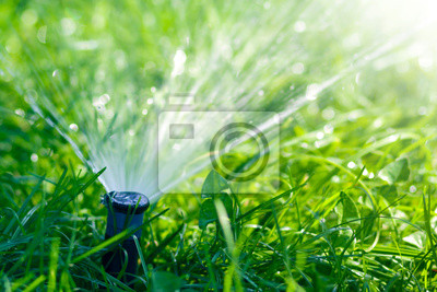 Bild Lawn water sprinkler spraying water over lawn green fresh grass in garden or backyard on hot summer day. Automatic watering equipment, lawn maintenance, gardening and tools concept.