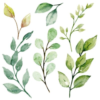 Bild Leaves watercolor set. Hand painting floral illustration. Green leaf, plants, foliage, branches isolated on white background.