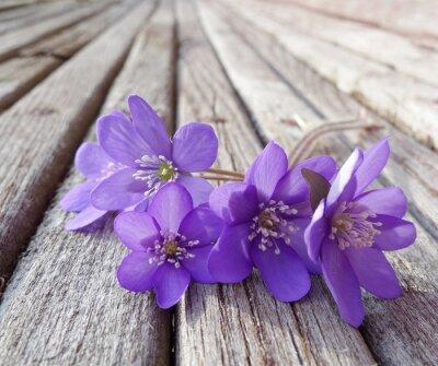 Bild Leberblümchen flowes auf Holztisch Detail