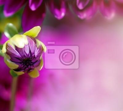 Lila blume blütenblatt hintergrund leinwandbilder • bilder Lavendel ...