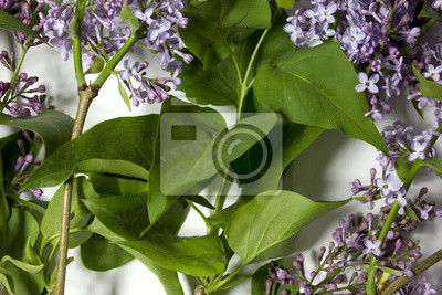 Bild Lila Blüten