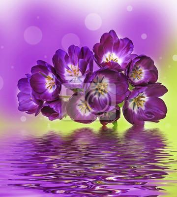 Bild lila Tulpen und Farben Bokeh Hintergrund