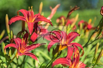Lilien Im Garten Leinwandbilder Bilder Leuchtend Lilie Close Up