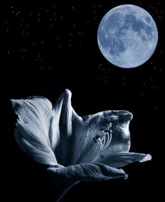 Bild lilly und der Mond