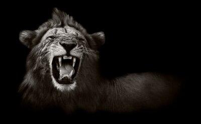 Bild Lion gefährliche Zähne anzeigt