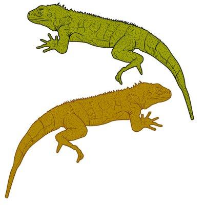 Bild Lizard ist Goanna Silhouette auf einem weißen Hintergrund. Abbildung