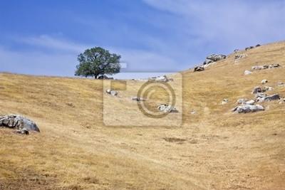 Lone Baum bis auf den Hügeln. Horizontale gedreht.