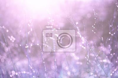 Lovely sonnigen lila Farbe verwischt Wiese mit Tröpfchen Reflexion Details mit Flare Hintergrund. Soft lila Farbton verwendet.