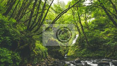 Bild Lush Forrest und Wasserfall in Stream