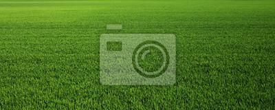 Bild Lush green grass meadow background