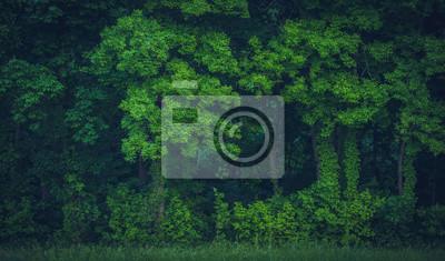 Bild Lush Tree Growth