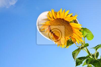 Lustige Sonnenblumen mit blauem Himmel und Hut